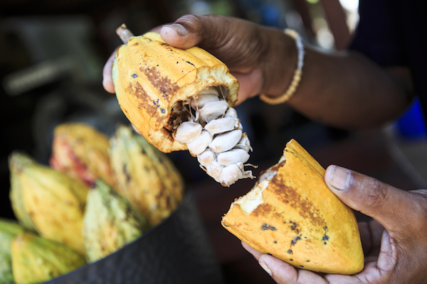 Cocoa istock 79275795 small